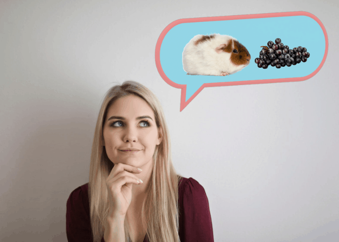 lady thinking about her guinea pig eating strawberries