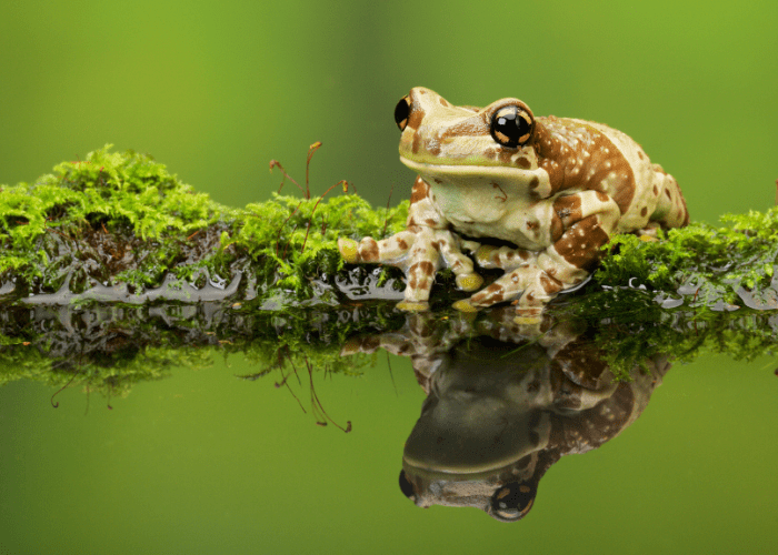a frog sitting on branch on the water