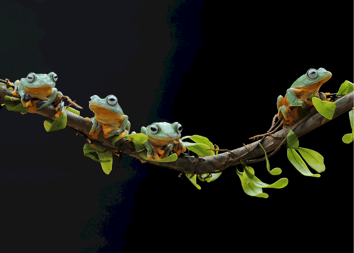 an army of frogs on branch