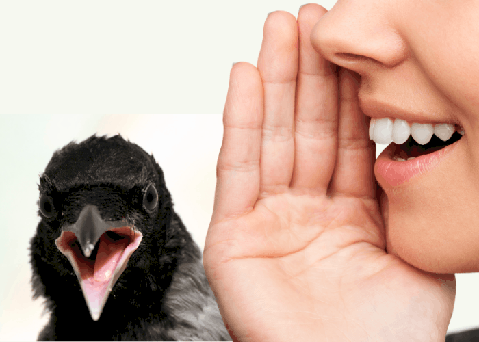 can crows talk like humans