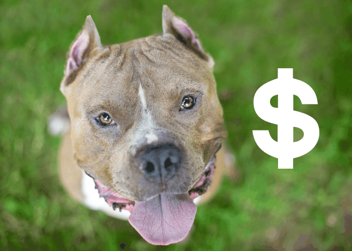 cropped amstaff with a dollar sign