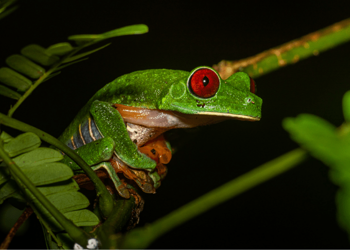 green frog clinging on a branch during the night
