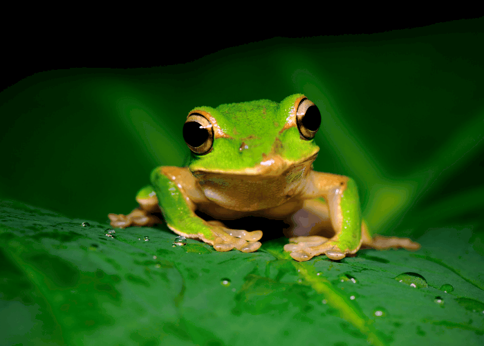 green frog on a leaf during the night
