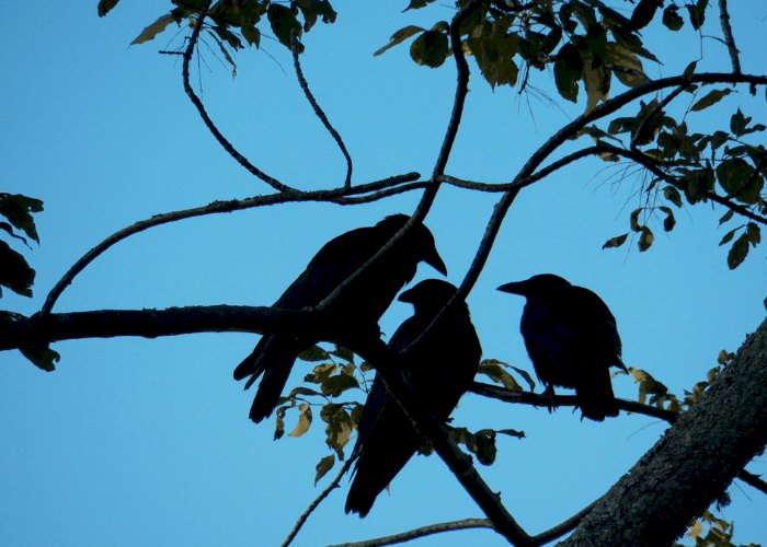 group of birds silhoutte