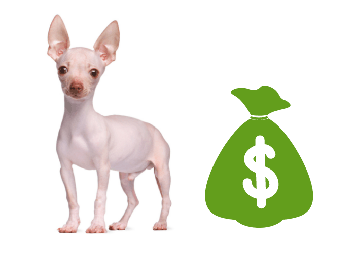 hairless chihuahua and a bag of money