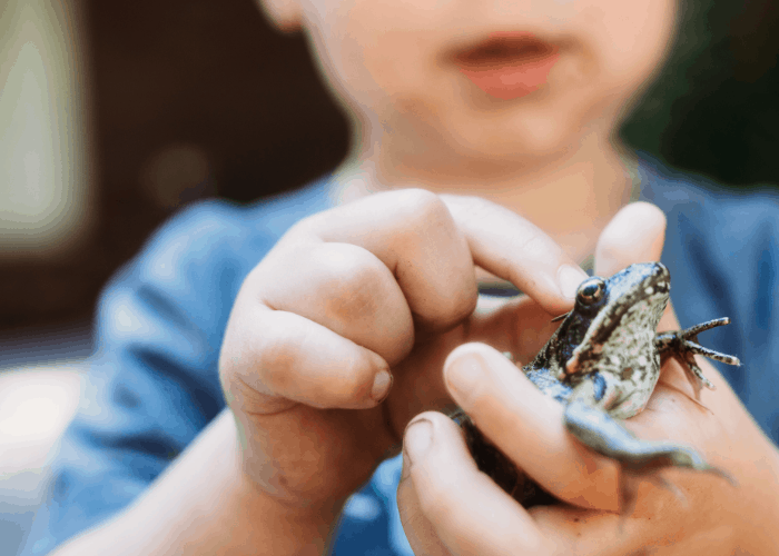 little girl touching a frog