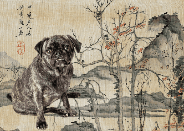 pug in ancient china